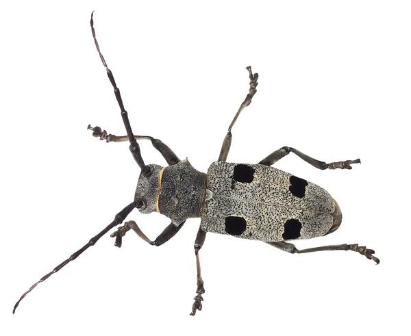 Traitement bois insectes limination termites arles for Insecte attaquant le bois